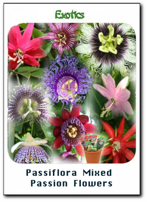 Пасифлора микс, семена (Passiflora Mixed Passion Flowers)