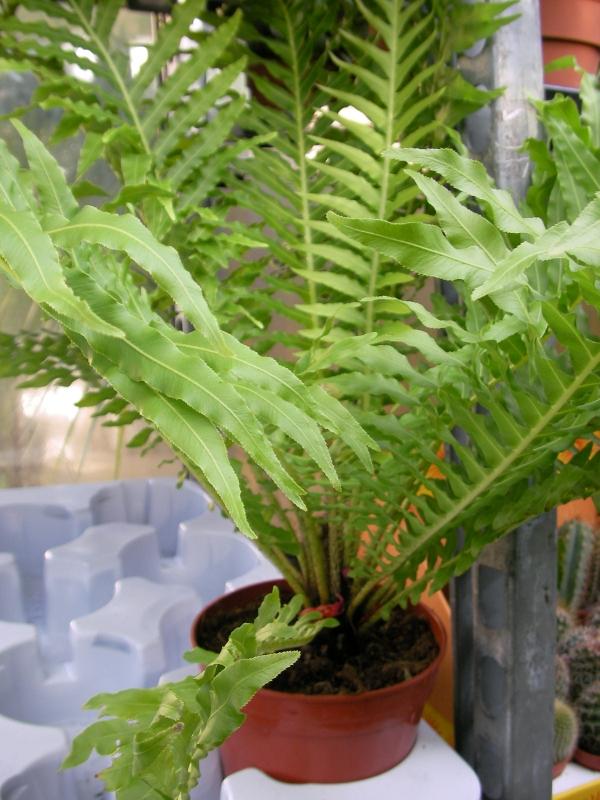 Энциклопедия домашних растений
