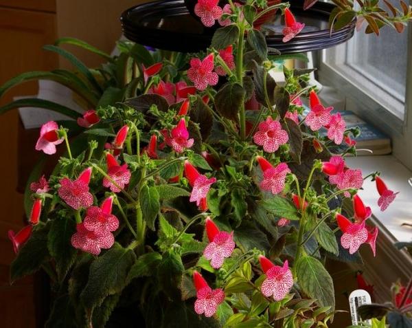 Каталог растений сайта Gardeniaru