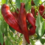Люти чушки семена Big Jim (Capsicum annum Numex Big Jim)