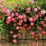 Онлайн магазин роза хутор официальный сайт - 2